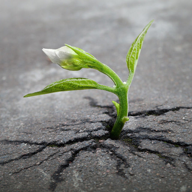 May 21st Newsletter – Resilience